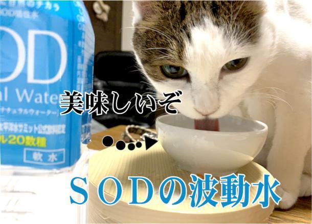 SODの水